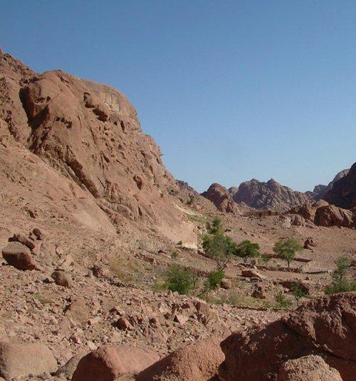 RUBI ATE THE FIG - Sinai by RUBI ATE THE FIG