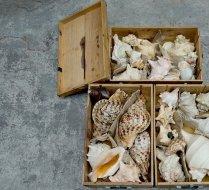 Stromb shell box