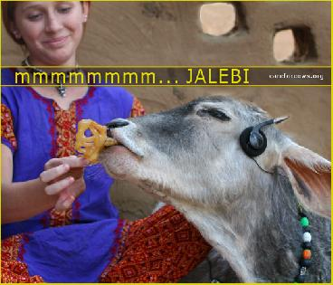 Cows......Love.....jalebis.....and JALEBI Music !!  ♥´♫•♥