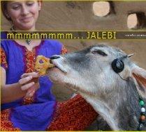 Cows......Love.....jalebis.....and JALEBI Music !!  ♥´♫•♥